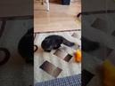 4402). 27.07.2019 - Котик Пухлик (теперь Брюс) уехал домой! (видео из дома)