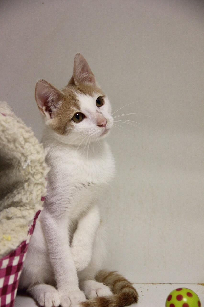 ❣Макарчик❣- очаровательный юный котик в поисках дома