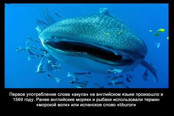 Valteya - Интересные факты о акулах / Хищники морей.(Видео. Фото) - Страница 2 TmP29N02t0s