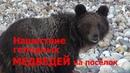 Алтай Телецкое озеро Нашествие голодных медведей Altai bears Алтайский заповедник Altai Reserve
