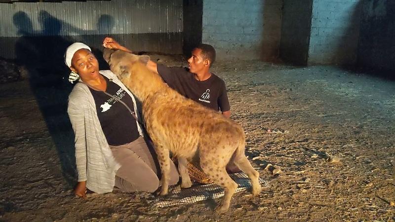 Feeding hyenas in the old walled city of Harar Jugol Ethiopia