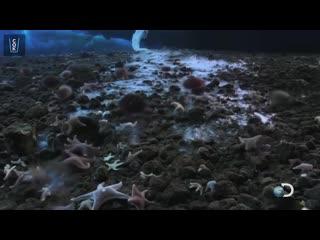 Брайникл  подводная сосулька, которую также называют пальцем смерти, замораживающим всё на своём пути.