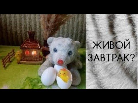 ЗАВТРАК ТИГРЁНКА ФУКИ