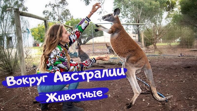 Вокруг Австралии Дикие животные