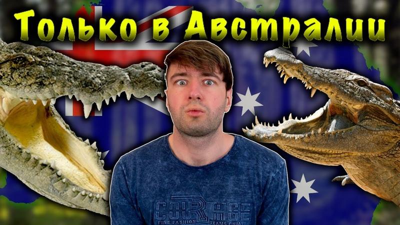 В АВСТРАЛИИ ДРЕССИРОВАННЫЕ КРОКОДИЛЫ УНИКАЛЬНЫЙ МИР ЖИВОТНЫХ В АВСТРАЛИИ Только в Австралии