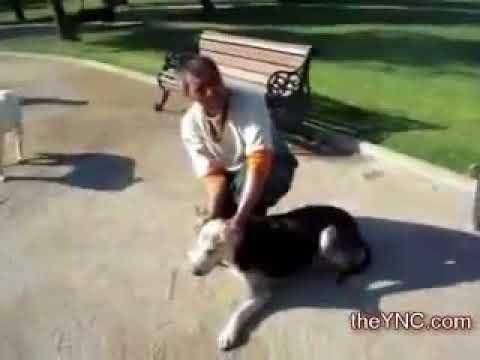 Усыпление собак в Испании