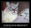 Личный фотоальбом Вадима Романова