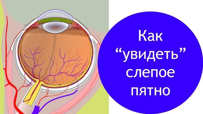 Как увидеть слепое пятно строение глаза человека