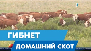 В Казахстане гибнет домашний скот! прогнозы падежа и решение проблемы