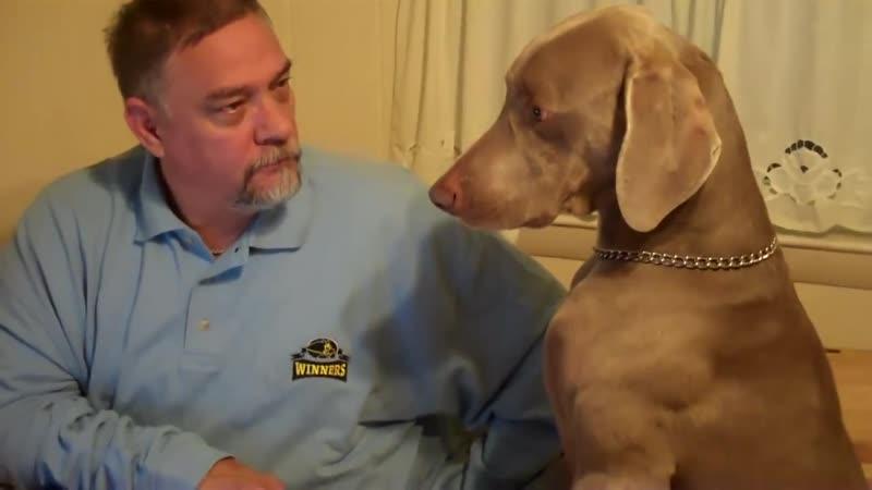 Люди и звери ОНИ ТАК ПОХОЖИ НА НАС Собака обижается что на нее обращают мало внимания 😄 25 09 12