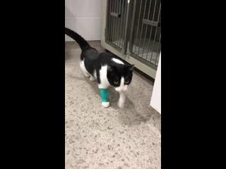 """Videó: Фонд помощи бездомным животным """"Путь домой"""""""