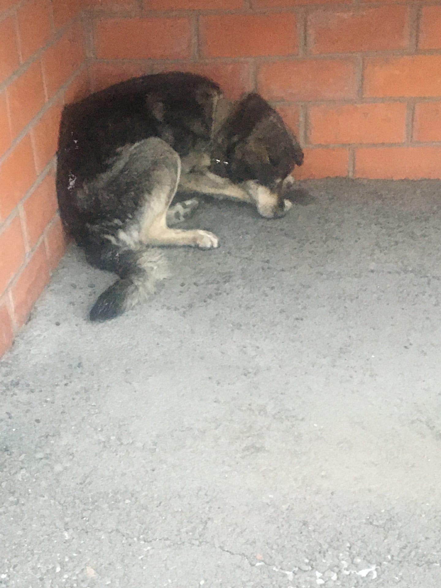 чья собачка замерзшая еле живая отозовитесь, я не знаю чем собачке помочь?