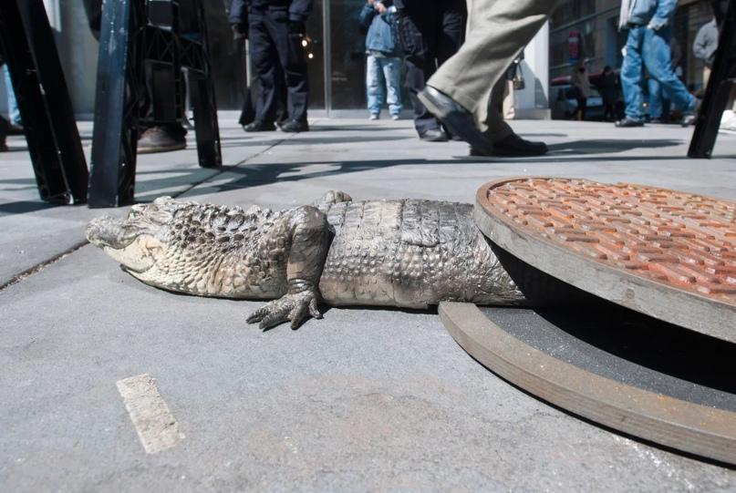 Крокодил из канализационного люка. Инсталляция. Источник: http://afisha.nyc/