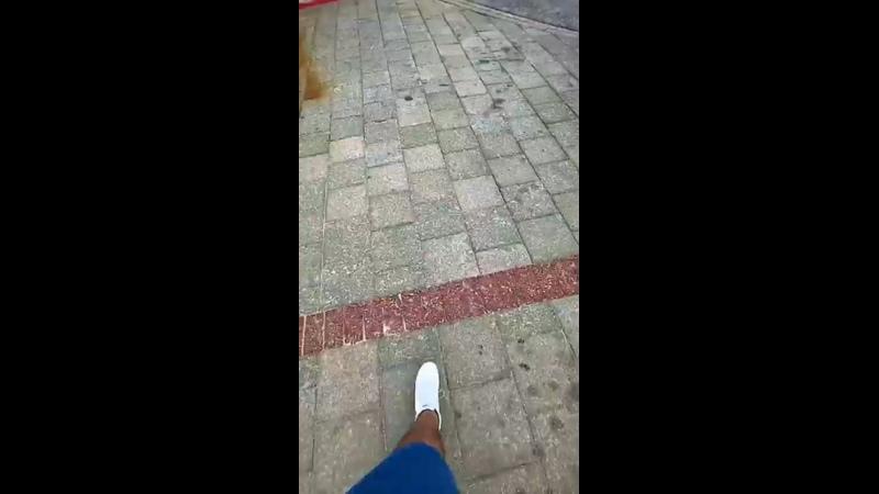Видео от Светланы Михеевой