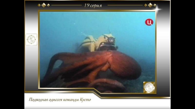 Подводная одиссея команды Кусто Выпуск 19 Осминожек осминожек 19 1971