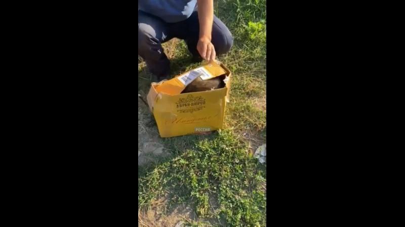 Енот пробрался в алкогольный магазин в Краснодаре Хозяин помещения позвонил в муниципальную