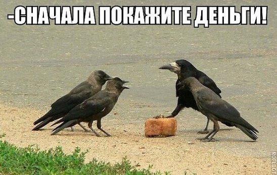 photo from album of Svetlana Lavrova №10