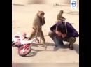 Ох уж эти смешные обезьяны 🙂