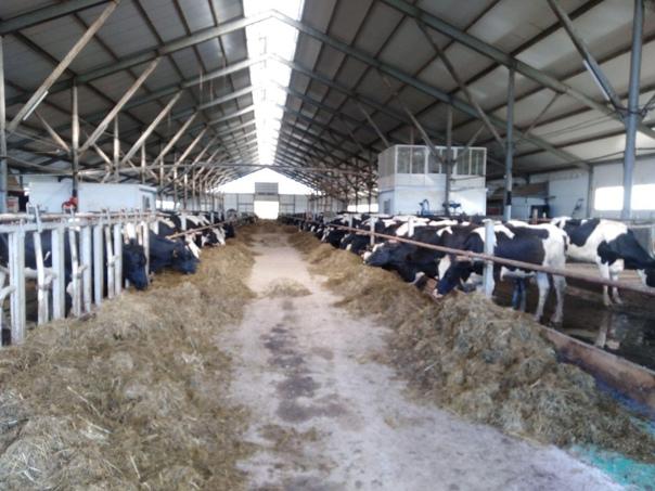 ✅В новогодние праздники в отрасли сельского хозяйства работа