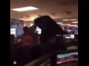 Видео из офиса CitronResearch Melvin Capital во время приключений на рынке акций GameStop