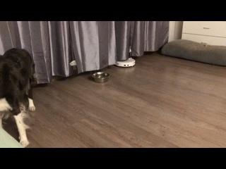 Видео от Aisknekht Toronto