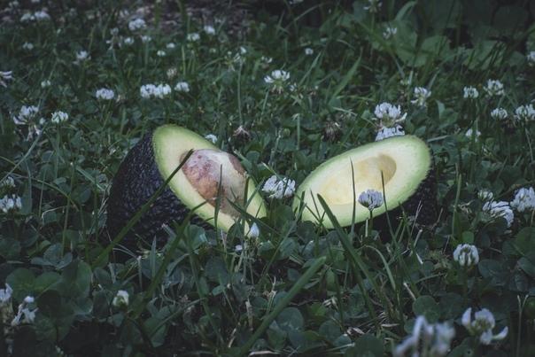 Авокадо это ядовитая ягода «Авокадо это пища, не имеющая себе равных, настоящий райский плод». Дэвид Фэрчайлд Авокадо токсично почти для всех животных, включая кошек и собак. Люди редкое