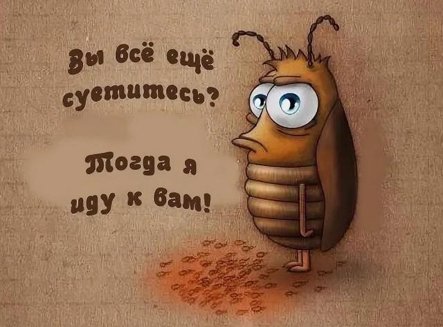 как уничтожить тараканов в доме,
