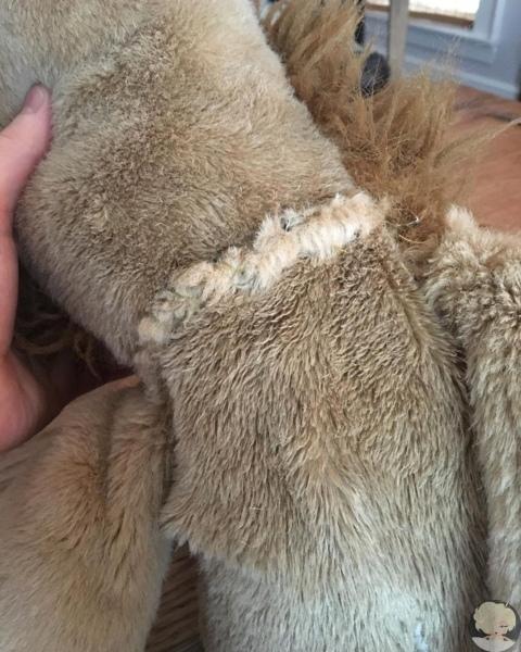 Милота дня: посмотри, какой сюрприз устроил Крис Эванс своей собаке