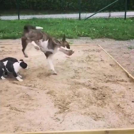 Freestylo Doggy · coub, коуб