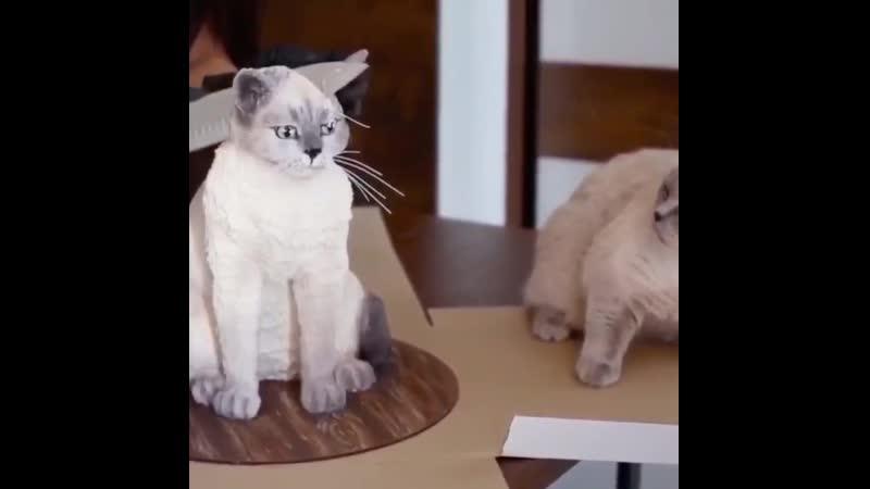 Кот в шоке😆
