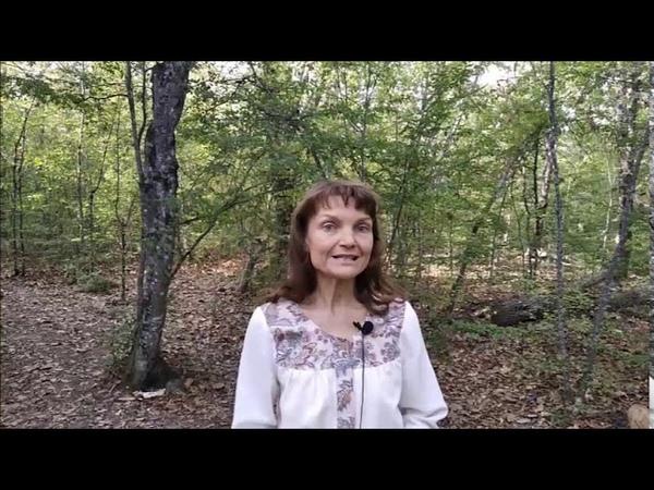Мудрец Крол и Ольгина мечта Мудрецы дольменов