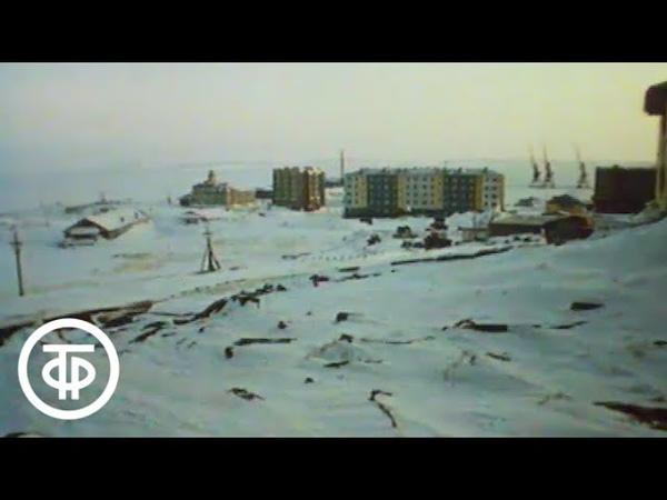 Обыкновенная Арктика 1991