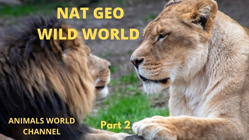 National Geographic Documentary HD 2020 World's Deadliest Wild Lions and Dogs NatGeo Wildlife Part 2 YouTube