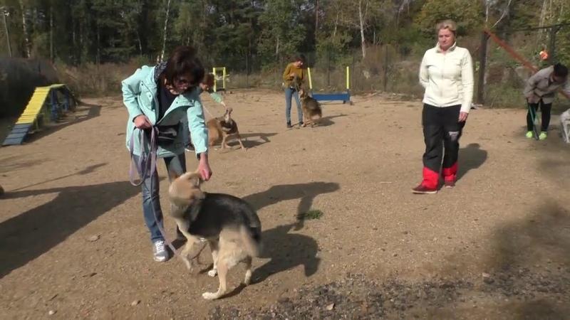 Как проходят наши занятия с собаками живущими в приюте