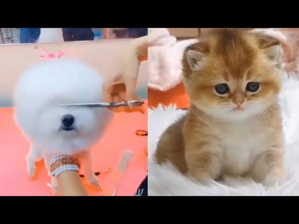 Super cute kittens Episode 11 Ultimate Cute Kittens Beautiful Cats Smart Puppies