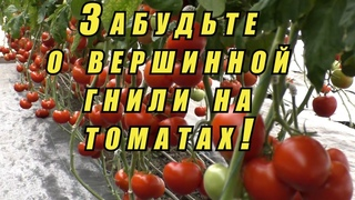 Как спасти томаты от вершинной гнили- реально работающие советы агронома.