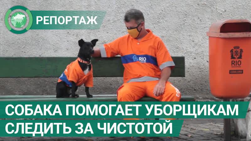 Собака помогает португальским уборщикам следить за чистотой города ФАН ТВ
