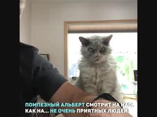 Еще один кот, который точно станет мемом
