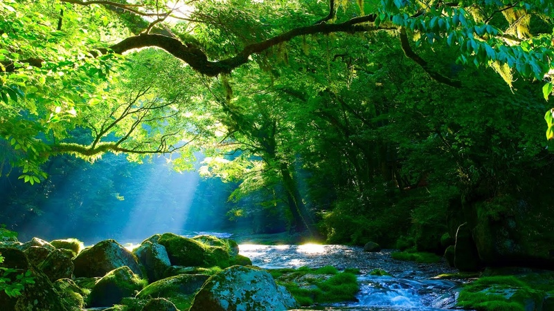 Relaxing Sleep Music: Deep Meditation Music Stress Relief Dancing with Nature By Tim Janis