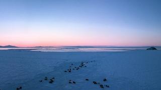 Подлёдная рыбалка на Колыме. Рассвет в заливе.