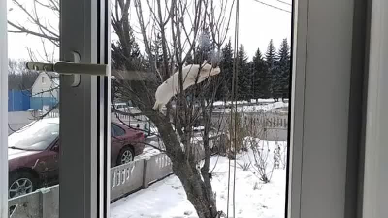 Ивнянский кот ворует сало