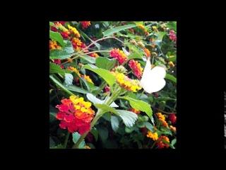 Asimov and The Hidden Circus - Flowers (Full Album 2020)