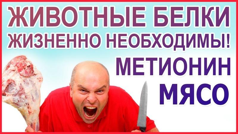 МЯСО нужно есть Желудок орган для мяса Люди это животные значит должны есть мясо Метионин
