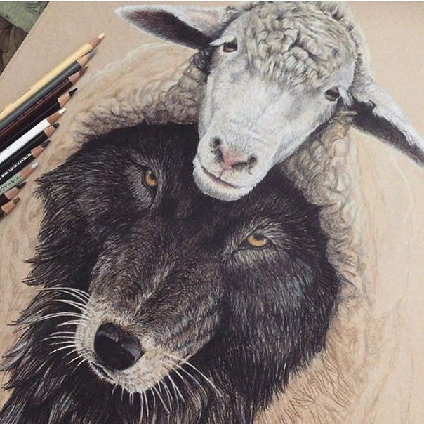 днем картинки волки овечка предварительно