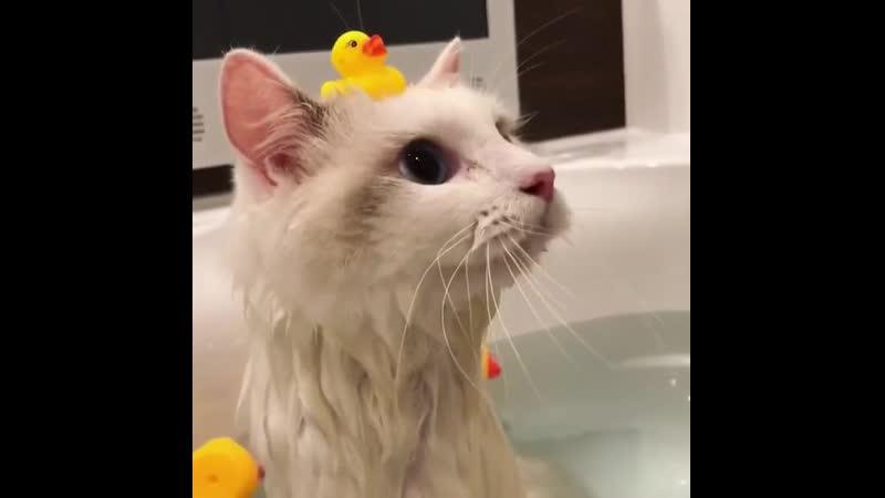 Swim in the bathroom мыться в ванной