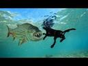 8 Fische, die Landtiere fressen
