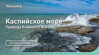 Каспийское море   Природа Ближнего Востока   Discovery