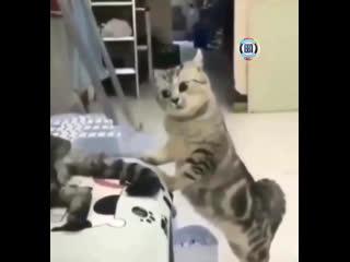 Почему от тебя пахнет другими кошками