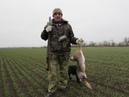 Охота на Зайца с собакой и старым опытным охотником